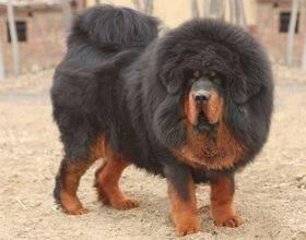 大型 犬 種類